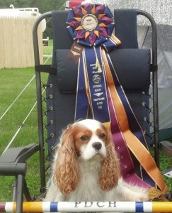 Lifetime Achievement Award and Performance Dog Champion-Bronze